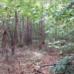 Grant Parish Investment property for sale