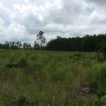 Timberland for sale in Natchitoches Parish