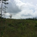 Natchitoches Parish Recreational land for sale