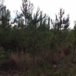 Natchitoches Parish Timberland for sale