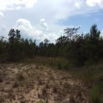 Natchitoches Parish Timberland property for sale