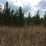 Natchitoches Parish Recreational property for sale