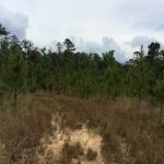 Recreational land for sale in Natchitoches Parish