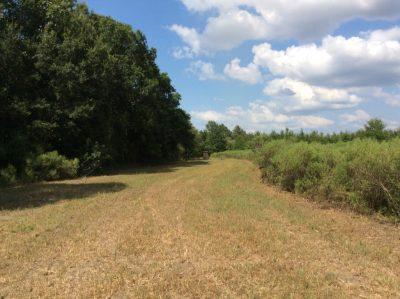 Fool River Tract, Catahoula Parish, 215 Acres +/-