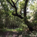 Hunting property for sale in La Salle Parish