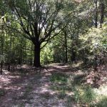 Hunting land for sale in La Salle Parish