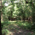 Timberland for sale in La Salle Parish
