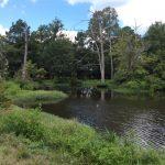La Salle Parish Hunting land for sale