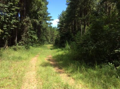 Timberland property for sale in Hinds County