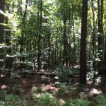 Hinds County Investment property for sale