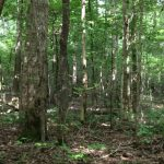 Hinds County Timberland property for sale