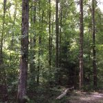 Hinds County Recreational land for sale