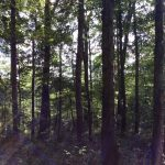 Hinds County Recreational property for sale
