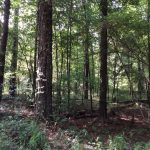 Hinds County Timberland for sale