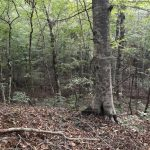Timberland for sale in Caldwell Parish