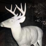 Caldwell Parish Hunting land for sale