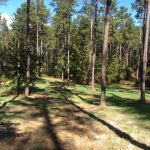 Timberland property for sale in Caldwell Parish