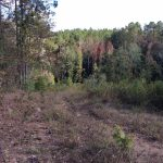 Hunting land for sale in Caldwell Parish