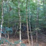 Investment land for sale in Caldwell Parish