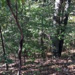 Investment property for sale in Caldwell Parish