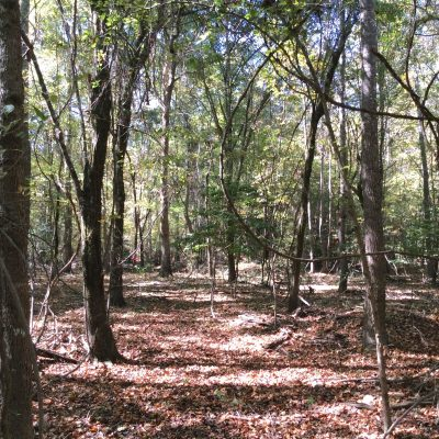 Caldwell Parish Timberland property for sale