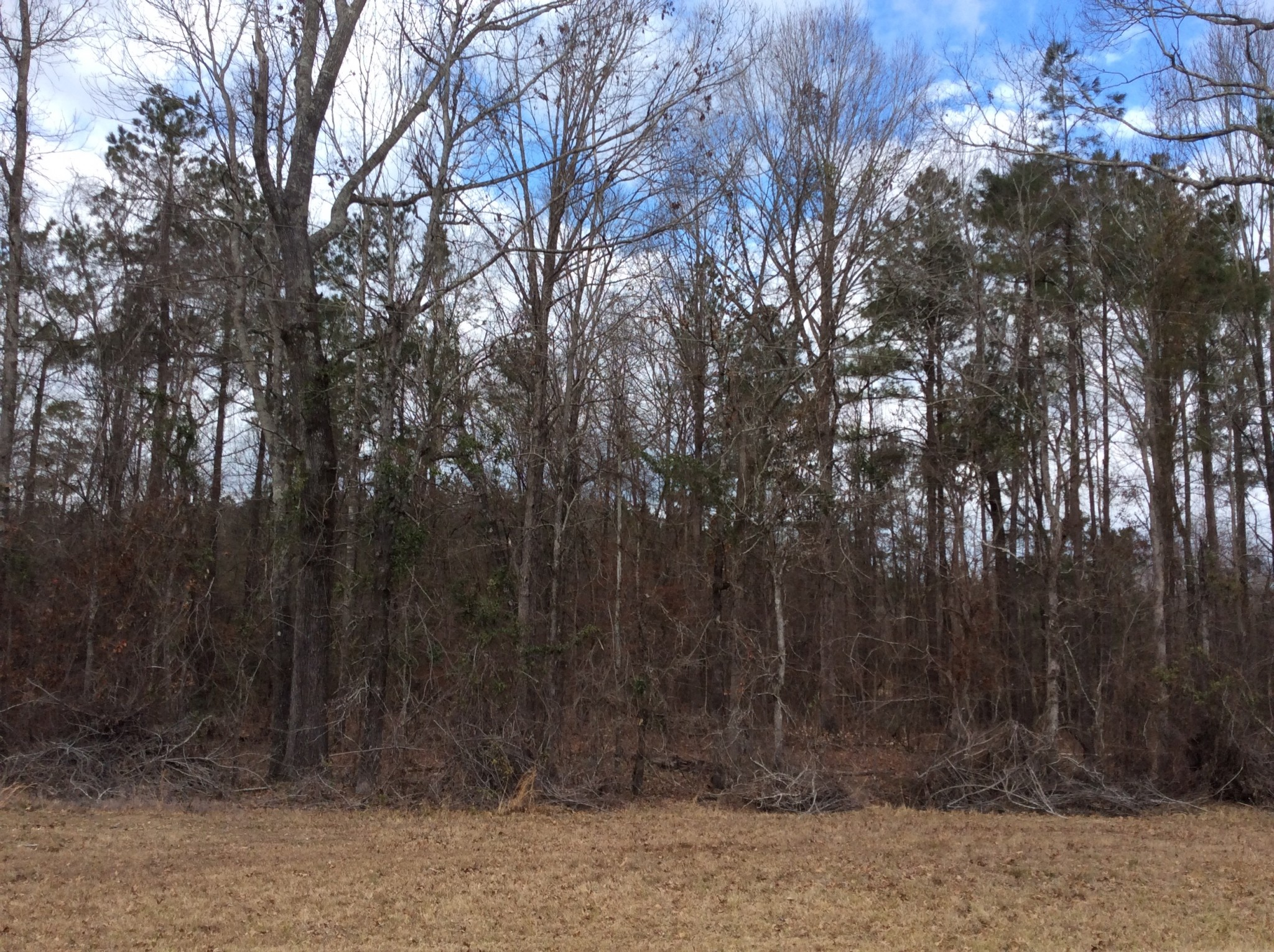 Caldwell Parish Hunting property for sale