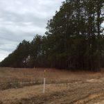 Development land for sale in Caldwell Parish