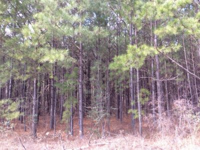 Caldwell Parish Hunting land for sale