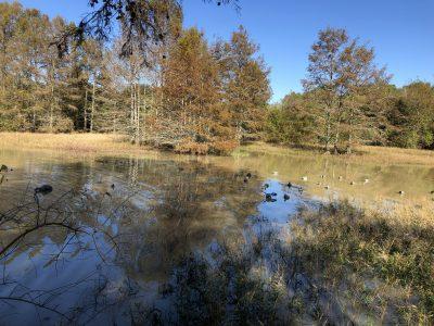 Hunting land for sale in Concordia Parish