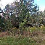 Calcasieu Parish Recreational property for sale