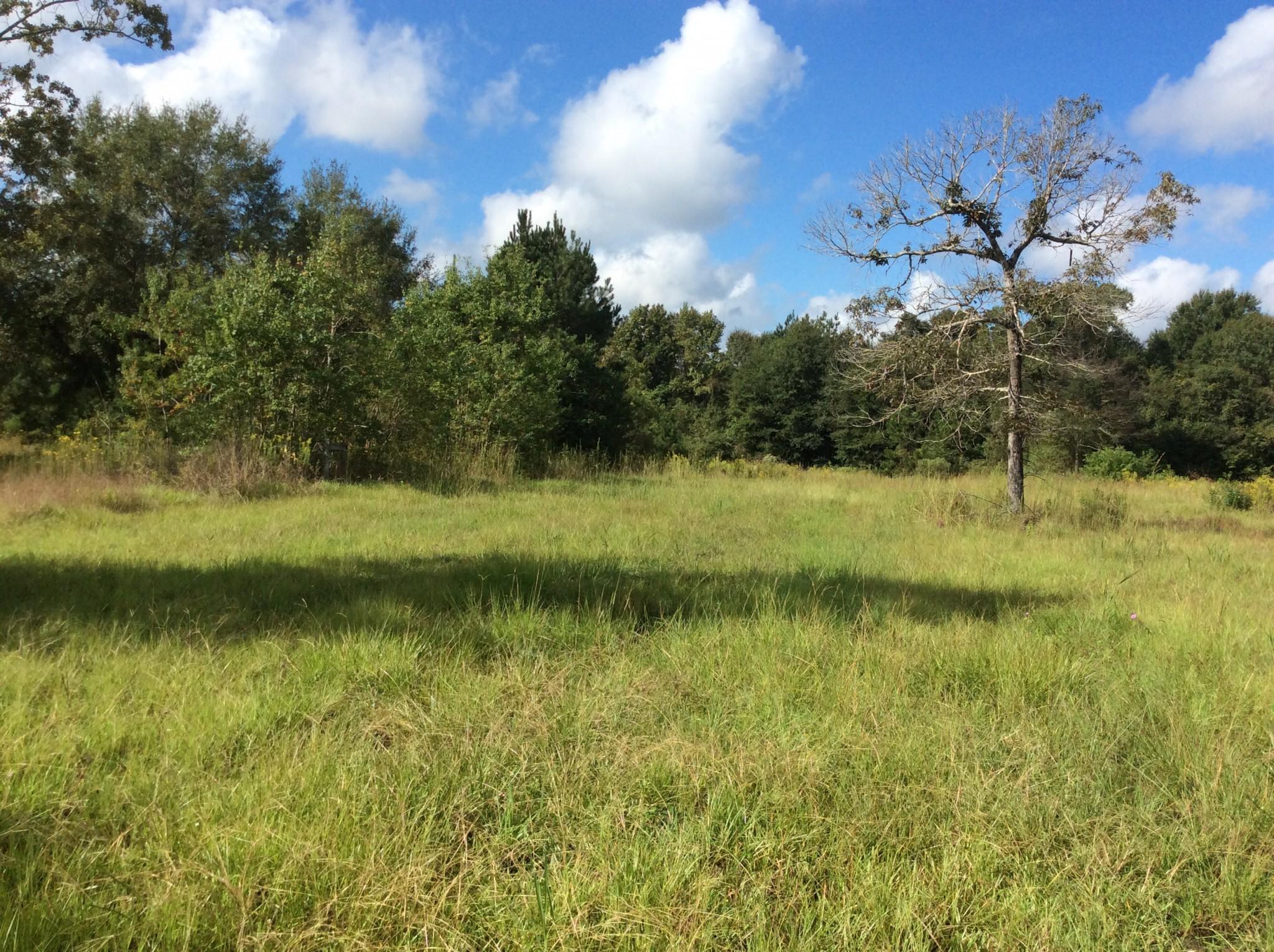 Calcasieu Parish Timberland for sale