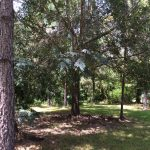 Agricultural property for sale in Beauregard Parish