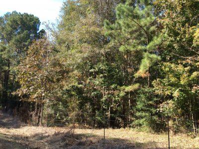 Beauregard Parish Recreational property for sale