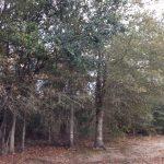 Calcasieu Parish Investment property for sale