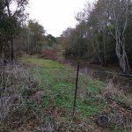 Calcasieu Parish Timberland property for sale