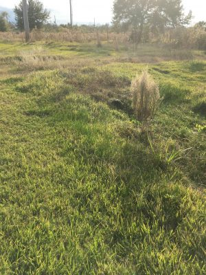 Cameron Parish Agricultural property for sale