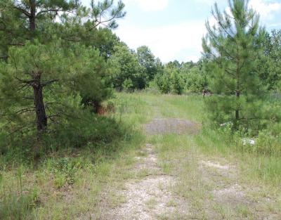 Radio Tower Road Tract, Allen Parish, 20 Acres +/- LAALLEPP20