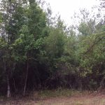 Beauregard Parish Agricultural property for sale