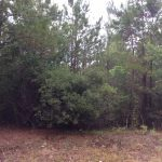 Agricultural land for sale in Beauregard Parish