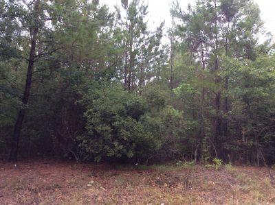 Agricultural land for sale in Beauregard Parish