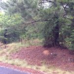 Investment land for sale in Beauregard Parish