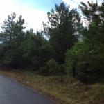 Timberland property for sale in Beauregard Parish