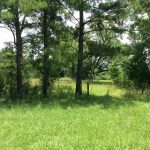 Calcasieu Parish Agricultural land for sale