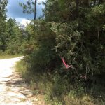 Investment land for sale in Beauregard Parish
