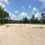 Beauregard Parish Investment land for sale
