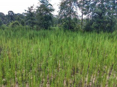Brushy Creek Tract, Beauregard Parish, 40 Acres +/-