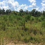 Beauregard Parish Timberland for sale