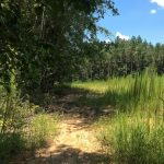 Timberland for sale in Beauregard Parish