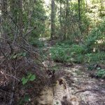 Beauregard Parish Recreational property for sale