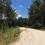 Timberland property for sale in Beauregard Parish